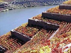 Portugal, Douro vineyards. Oporto