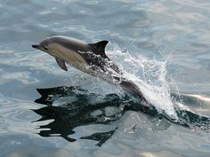 Dolphins can be regularly spotted at Malin Head in #Donegal #WildAtlanticWay