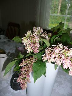 Syreenin kukkia