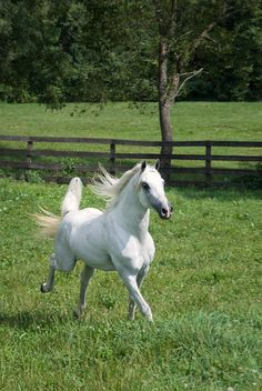 There's something about horses that makes them very graceful!