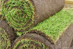 This helpful article covers soil preparation, how to lay turf correctly and how to look after your brand new lawn How To Lay Turf, 6 Month Baby Food, Great Websites, Gardening Tips, Native Gardens, Food Tips, Voici, Melbourne, Gardens