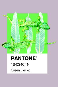 I created a series of collages and brought them to life based on Pantone color's names More on www. Collage Art, Collages, Color Names, Pantone Color, Illustration, Plant Leaves, Photoshop, Graphic Design, Type