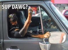sup dog funny pictures