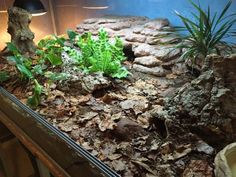 Gorgeous bioactive setup for a lucky blue tongue skink by Viktor Feltenberg