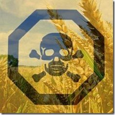 Preppers Anonymous | With recent information coming to light on GMO seeds it is becoming more and more apparent that this issue of the adverse health effects of GMO food is very real.