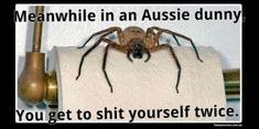 Image result for australian memes