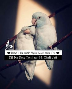 best free images of love birds sitting together and urdu love poetry lines written on it. Love Birds Quotes, Muslim Love Quotes, Love Picture Quotes, Love Quotes Poetry, Secret Love Quotes, Love Quotes In Hindi, Islamic Love Quotes, True Love Quotes, Love Quotes With Images