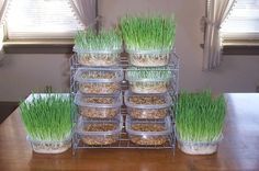 Mini fodder system