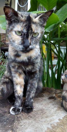 Aunty cat