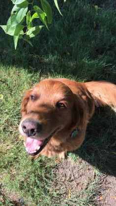 LOST DOG: 07/28/2017 - Princeton, Texas, TX, United States. Ref#: L34271 - #CritterAlert #LostPet #LostDog #MissingDog