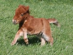 Cute Baby Miniature Horses | 10 freaking adorable baby horses