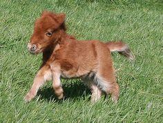 Cute Baby Miniature Horses   10 freaking adorable baby horses