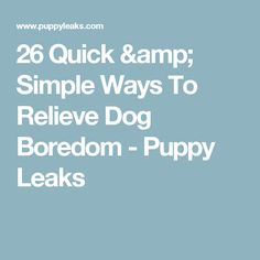 26 Quick & Simple Ways To Relieve Dog Boredom - Puppy Leaks