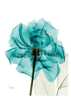 Teal Spirit Rose Art Print by Albert Koetsier at Art.com