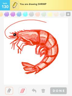 Shrimp Drawing | Shrimp Drawings - How to Draw Shrimp in Draw Something - The Best Draw ...
