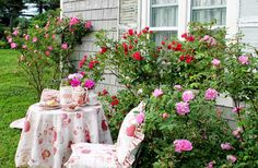 Aiken House & Gardens: A Rosy Tea  ~ William Baffin and Red Grootendorst roses ~