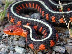 Beautiful and Colorful Small Snake Pets, Beautiful Small Snake, Colorful Small Snake, Small Snake Pets, small snake, cute snake, beautiful snake, amazing snake, awesome small snake