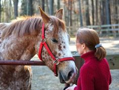 What a horse teaches us about mindfulness: Equine Therapy