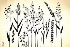Wild herbs, hair grass, wheat - Illustrations