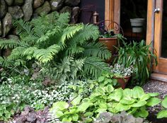 Shade Garden Design Ideas shade garden with a water feature yes those are hostas in austin set in and Small Shade Garden Ideas Garden Design 2011 Under The Ferns