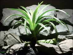 reptile habitat plants grn spider with trunk silk srp064 ron beck designs | ronbeckdesigns.com   #ronbeckdesigns #reptile #habitat #plant