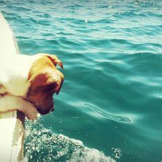 Jack russel,sea,summer