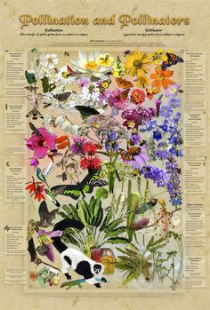 Pollination and Pollinators  Flowering plants are intimately tied to wind, water, and especially animals to make seeds and complete their life cycles. Showy flowers, big and small, owe their size, shape, perfume and color to the preferences of critters; insects especially may share any number of blooms from different plant species. This poster illustrates the kaleidoscopic diversity of both the flowers and their pollinators (the astute observer will note that bumblebees love blue).