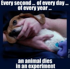 This beagle puppy is being killed at the end of the experiment.  Just in the time you spent looking at this photo, another animal was killed~    THIS KILLING MUST BE STOPPED. There is no need for it! Science is advanced enough to provide alternatives! End animal testing!