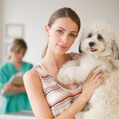 One of the best lovable pet there is are dogs. Of course your pet dog is lovable if their healthy and balanced. As a responsible pet owner you will have to look over your dog health.