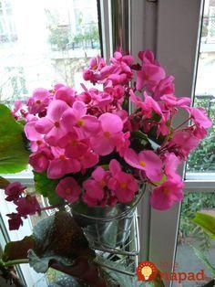 Ako jednoducho som priviedla z životu moje kvety: Dajte im aj vy tento životabudič, odvďačia sa krásou a zdravím! Glass Vase, Plants, Home Decor, Lawn And Garden, Chemistry, Decoration Home, Room Decor, Plant, Home Interior Design