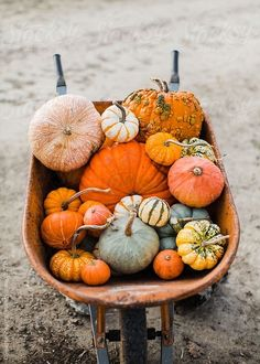Image in seasons and holidays collection by Katelyn Pugh Hello Autumn, Autumn Day, Autumn Home, Autumn Leaves, The Farm, Fall Inspiration, Wallpaper Collection, Pumpkin Farm, Pumpkin Spice