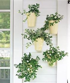 Plants can enliven a bare wall, and bringing them up to eye level makes them easier to enjoy.Using an even number of plants results in a formal look; odd numbers appear more loose and natural. Here, five glazed ivory pots are planted with trailing white flowers. The white-on-white color scheme is clean and relaxed. Cabaret White Calibrachoa makes an excellent hanging plant, thanks to its overflowing flowers. It requires full sun to thrive.