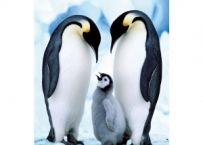 Minipuzzle Animale 54 Piese | Bebeart Puzzle, Emperor Penguins, Animals, Google, Image, Emperor Penguin, Penguins, Puzzles, Animales
