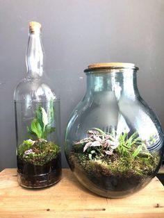 how to paint a cactus flower Terrarium Diy, Bottle Terrarium, Bottle Garden, Diy Garden, Garden Care, Suculentas Diy, Plants In Bottles, Paludarium, Mason Jar Lighting