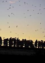Thursday's pick: Nature Night - Bats