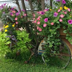 Neat use for old bike!