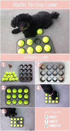 Dog games are a great way to keep your pet stimulated and to practice using their senses. This muffin tin dog treat game is .. #dogtraining #puppytraining