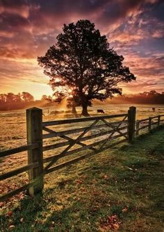 Beautiful country morning