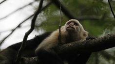 Costa Rica se convierte en el primer país de América en prohibir la caza    Una ley aprobada por el Congreso del país esta semana prohíbe la caza deportiva así como tener animales silvestres como mascotas