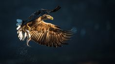 Photo Sea Eagle by Luigi Rotondaro on Just Blinds, Birds Of Prey, Animal Photography, Pet Birds, Eagles, Animals Beautiful, Bald Eagle, Cool Photos, Sea