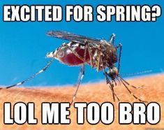 Spring has sprung, and as usual, the internet has something funny to say about it! Check out 16 very funny memes that perfectly sum up springtime.: 16 Funny Memes About Spring Very Funny Memes, Funny Jokes, Funniest Memes, Funny Animal Pictures, Funny Animals, Funny Pics, Funny Images, Spring Meme, Summer Meme