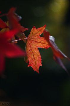 "~ Autumn ~""Autumn is a classical music; when it begins, the gravity disappears!"" ~ Mehmet Murat ildan"