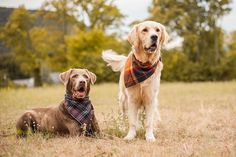 working together with my best friend Merlin for was so much fun ✨ did you know that we both measure the same… My Best Friend, Best Friends, Working Together, Merlin, Instagram Feed, Did You Know, Knowing You, Labrador Retriever, I Am Awesome