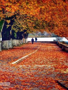 Autumn at Ioannina town, Epirus, Greece. Patras, Greece Map, Greece Travel, Corfu Island, Places In Greece, Paradise On Earth, Autumn Trees, Greek Islands, Athens