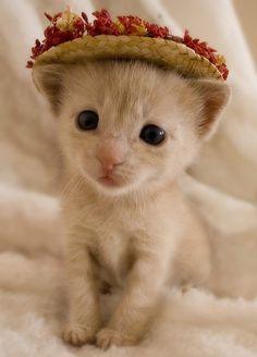 adorable kitten in cool hat