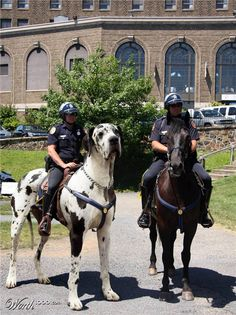 Failed attempt at mounted police.  Easily escaped by yelling fetch and throwing a tennis ball.
