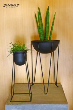 Wire pots with lovely plants! #greenery #succulents #plants #wirepots #decoration