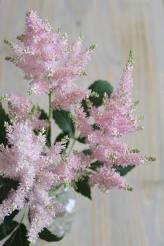 Astilbe Utilisez l'astilbe pour apporter hauteur et légèreté à vos bouquets ! Cette jolie fleur duveteuse est aussi très belle utilisée seule en bouquet ! Attention, l'astilbe craint beaucoup la sécheresse, attention à ne pas la laisser trop longtemps hors de l'eau.