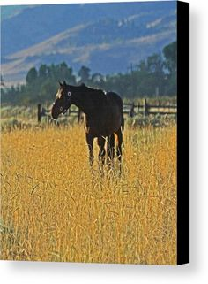 Horse In Field At Honey Lake Canvas Print featuring the photograph Horse In Field At Honey Lake by Tom Janca