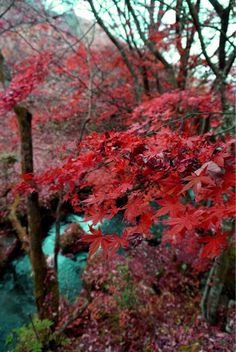 Best season in Japan #autumn #japan #kurokawaonsen #SalvatoreCuomo